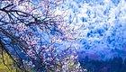 西藏的春天叫林芝。春天进藏不入林芝,走遍全藏也枉然。