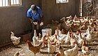 常接触或屠宰牲畜,该如何预防食源性疾病?