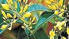有毒野生动植物警示  这种草不是金银花,吃了真的让人肝肠寸断!!