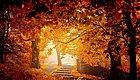 秋季养生7个最佳,如何保持健康的体魄?