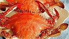 吃螃蟹有禁忌!营养师教你吃螃蟹的正确打开方式