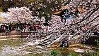 2019年4月4-7日春润江南-醉美太湖-花海小镇3.5日游招募(樱花飞 桃花俏 杜鹃开)