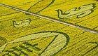 美爆了!这大概是苏州最震撼的一片油菜花田