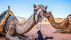 约旦行摄日记——探访玫瑰之城和火星救援拍摄地