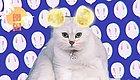 人类自诞生就学会了撸猫与歌唱月亮