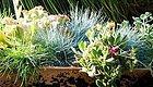 容器花园,方寸之间开启美妙园艺之旅!