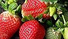 今年头一茬!水灵多汁、甜到炸裂的九九草莓终于可以吃了!