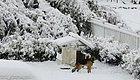 猪年第一场雪,送上一份雨雪天气健康指南