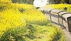 开往春天的火车美翻了!就在四川!
