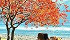 这个省份的秋天总被人们忽略,原来它竟如此惊艳!