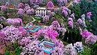 四川的春天,从赏花开始!