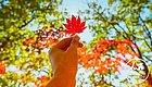 """有一种色彩叫""""五彩斑斓的红"""",今年秋天把这种色彩一网打尽"""