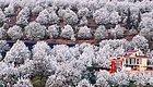 云南的春天,美得让人惊艳!