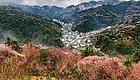 卖花渔村,今年春天最美的粉红花海