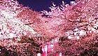 """想看樱花的抓紧了,日本最浪漫""""樱花季""""马上就到了!"""