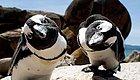 这些会对镜头摆pose的小企鹅,真的太萌了!