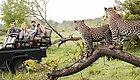 黄渤南非之旅的酷炫玩法,这里有不一样的非洲风情!