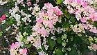 现在家里养的这几种花,千万别乱浇水!有可能因为这一瓢就挂了