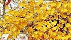 鲜花硕果溢满秋,秋日盛景,与君共赏