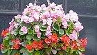 家里有阳台的千万别错过,这些花吊起来养绝对美到爆!
