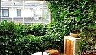 绿萝加点它,疯了一样长,几个月爬满整面墙