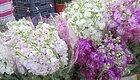 这些超好闻的花卉一定要养一盆,花香浓郁颜值又高,简直完美!