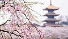 看看中国如此惊艳的春天