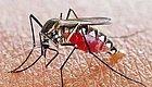视频告诉您:被刷屏的中国科学家陈小平用疟原虫感染治愈晚期癌症的真相!