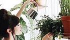 """让家里的植物都""""飞起来"""",她是怎么做到的?"""