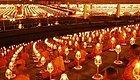 泰国最震撼的场面!10万信众齐聚法会祈福燃灯(视频)