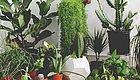 这些常见的盆栽绿植可以净化空气,原来是通过研究得来的