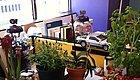 办公室桌面上的植物应该如何照顾,为什么你总把它养死?