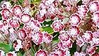 特别适合作为住宅景观的开花灌木,这几种开花植物不要错过