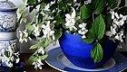 家里有儿童的可以养这些清新的净化植物,很适合养成小盆栽