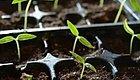 DIY播种专用土,让植物的种子发芽率增加几倍