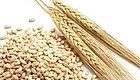 产房食堂:黑白两道通吃的大麦芽