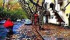 银杏、枫叶,栾树……上海颜值超高的马路!是时候走一波了!