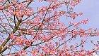 茂名有个地方,一年四季繁花似锦!坐标…… 打造乡村旅游(502)