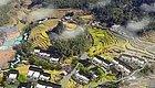 茂名这两个小镇入选省级特色小镇!一个在高州,另一个在......丨打造乡村旅游(474)