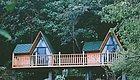 住森林树屋,在200亩梦幻花海里发呆,去包下整座山的民宿享避世悠闲