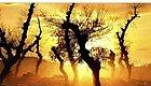 中国影像方志奈曼:点沙成金 千年沙城化生态绿洲
