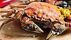 国庆节就别去人挤人了,在家吃螃蟹吧