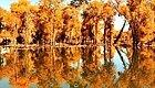 世界最大最美胡杨林,就在新疆!一年只有21天,错过等一年