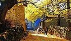 云南最惊艳的秋色在这,比香格里拉更静谧梦幻