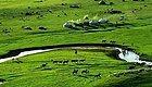 一定要去呼伦贝尔!去最后的狩鹿部落,来一场美景民俗体验之旅,解读最美边塞风光
