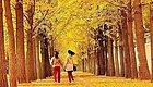 """双十一脱单攻略之""""你愿意和我一起去淋一场银杏雨吗?""""(内附拍照小Tips)"""
