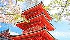 前方粉红预警!2019日本最火赏樱地深度盘点,春季赏樱看这儿就够了!