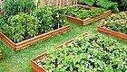 种菜  花园种些小菜,正好新鲜!